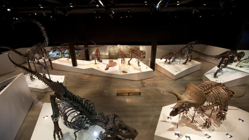 Houston Museum of Natural Science furloughs 70% of staff