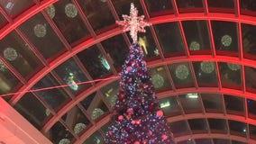 Christmas trees going up around Houston