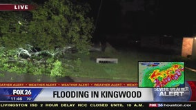 Massive tree falls over in Kingwood