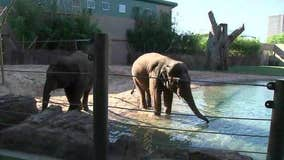 Houston Zoo reopens June 3 with online reservations