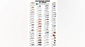 Saltwater weekly fishing report, week of May 20, 2020