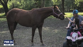 Pearland police say stabbing death of horse worst animal cruelty case they've ever seen