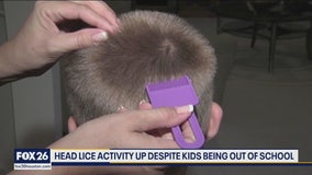 Head lice activity up despite kids being out of school