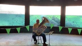 Tuba player performs for San Antonio Zoo hippos