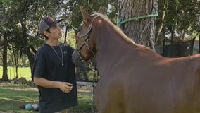 Pearland horse owner grieves the loss of his beloved animals