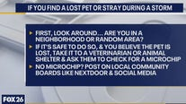Easing your pet's anxiety during a storm