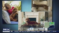 Pet Parade: Meet Melissa Wilson's pets