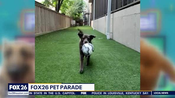 Pet Parade: Meet Chelsea Edward's dog