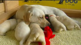 State commission deciding if breeder licensing program should stay or go