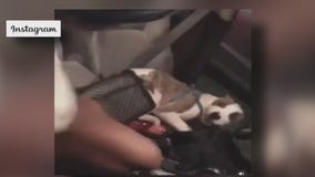 EXCLUSIVE: Woman who rescued puppy seen being beaten, kicked in viral video talks to FOX 26