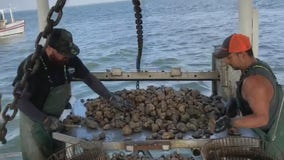 Texas oyster industry starts its season slowed by the COVID-19 pandemic