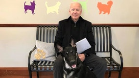 Joe Biden's German shepherd 'Major' set to be first shelter rescue dog in White House