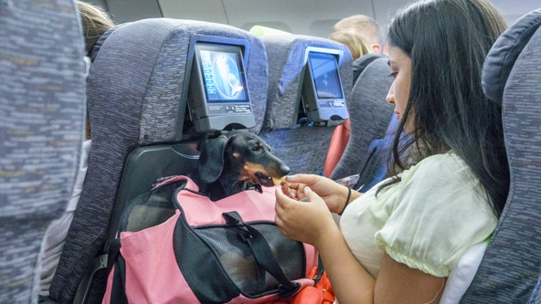 No more emotional support animals on planes after DOT closes major loophole
