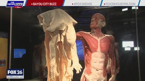 Body Worlds comes to the Houston Museum of Natural Science