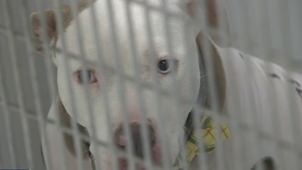 Judge to decide on death sentence for dog who mauled 3-year-old