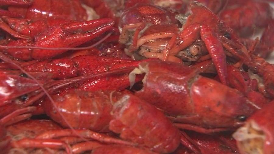 It's Crawfish season