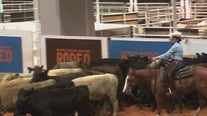 Cutting horses at NRG Arena today