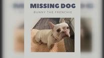 Houston man offers $50,000 reward for missing pregnant French bulldog