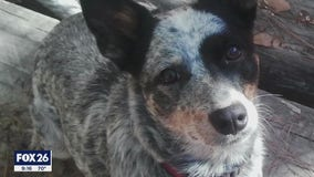 Kingwood man heartbroken, searching for answers after someone shoots and kills his beloved dog