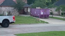 Tiger seen walking around in west Houston neighborhood