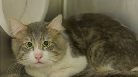 """""""BURSTING at the seams"""": Montgomery Co. Animal Shelter needs adopters, fosters"""