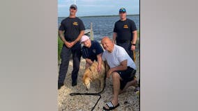 Golden retriever missing for 2 weeks found swimming in bay by NJSP, reunited with owners