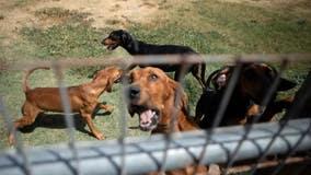 Gov. Abbott vetoes criminal justice bills, legislation to protect dogs, teach kids about domestic violence