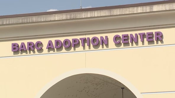 Recent euthanasia's at BARC has some rescue groups, animal shelter director at odds