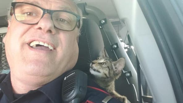 Kitten thrown onto Houston-area freeway finds new home