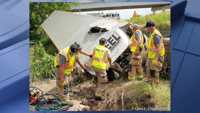 cow crash Fort Worth