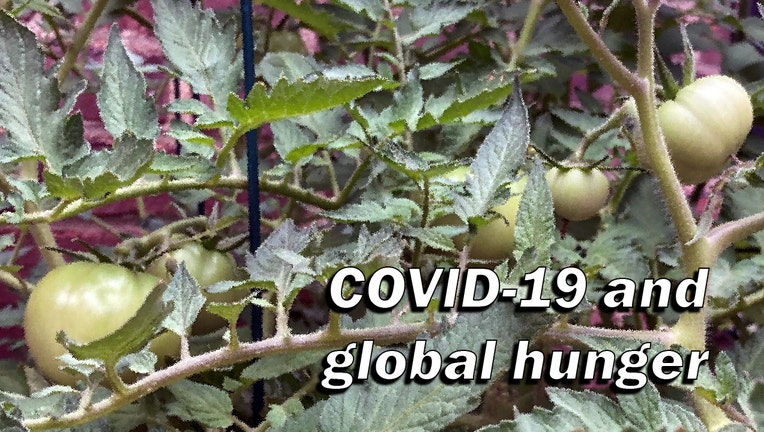 COVID-global-hunger