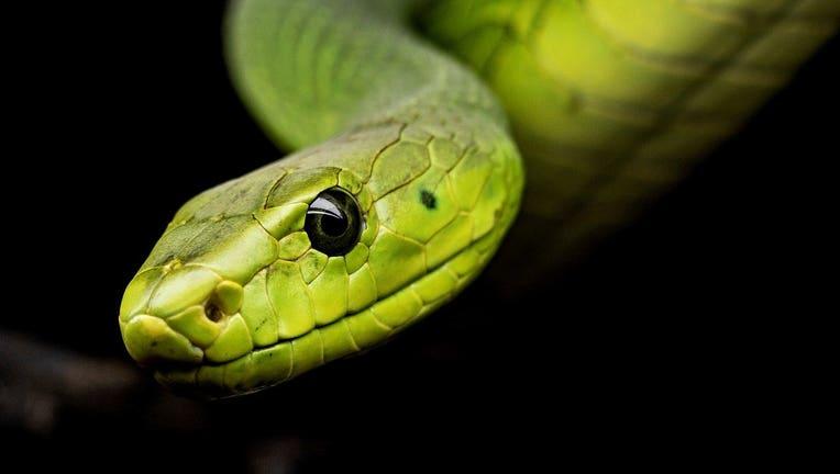 snake-3979601_1280