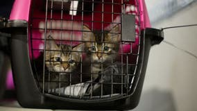 More than 130 pets from Louisiana arrived at Houston SPCA in preparation for Hurricane Ida