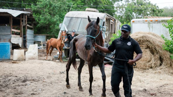 8 emaciated horses rescued from awful conditions in Houston's Sunnyside