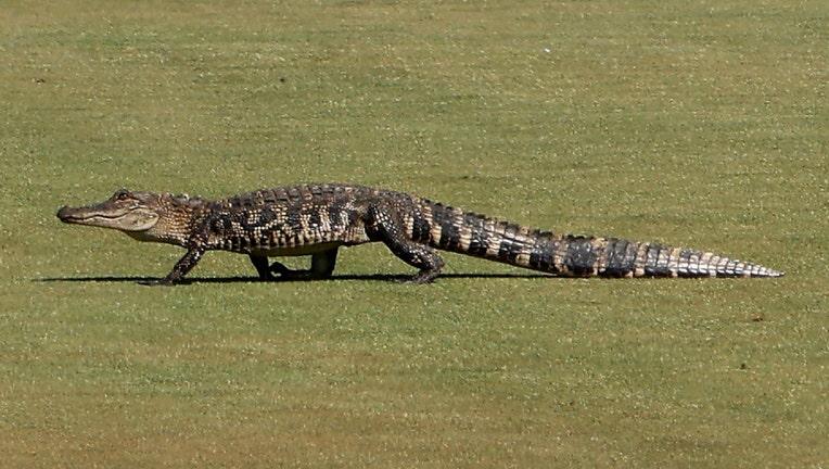 GETTY gator pga 052421