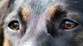 Bill requiring adequate shelter for dogs in Texas advances again
