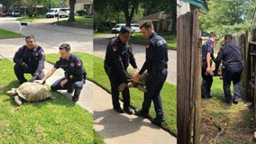 100-pound tortoise escapes Atascocita home, but doesn't make it far before deputies arrive