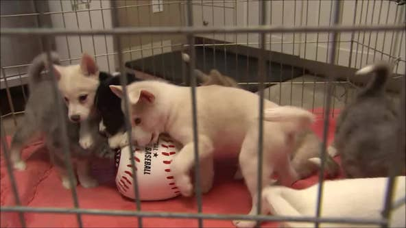 Altuve, Correa, Breggy: Puppies at Houston shelter named for Astros players