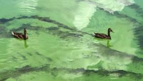 Public warned to avoid NJ waters taintedby toxic algae