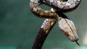60 pet snakes killed in Delaware house fire
