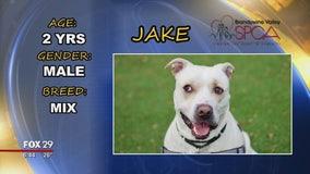 Furever Home: Meet Jake, George, and Sandy!