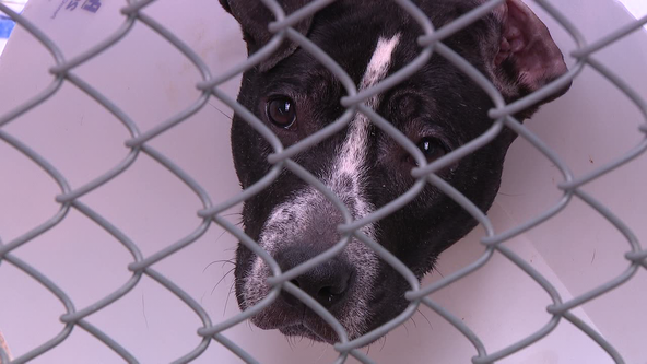 Fur babies find 'furever' homes in Pennsylvania SPCA's Pet Adoptathon