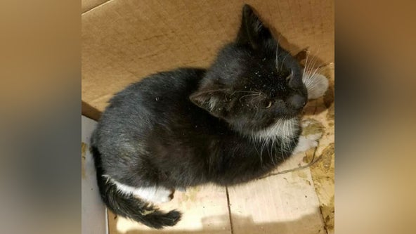 Police: Kitten euthanized after being thrown from moving vehicle on Route 202