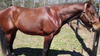 Mays Landing family searches for missing horse