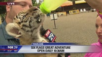 Jenn meets tiger cub, other animals at Six Flags