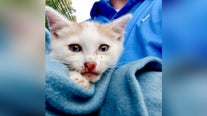 Police: 2 kittens tossed from SUV in New Jersey; 1 run over