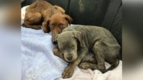 47 dogs rescued from 'hoarding horror' at Trenton home