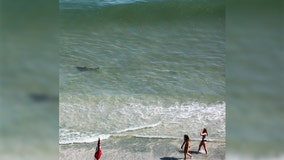 Photos reveal sharks circling unsuspecting beach-goers at Myrtle Beach