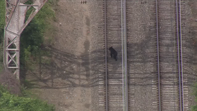 Bear spotted on train tracks in East Falls