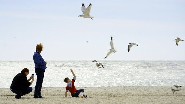 Study: Flesh-eating bacteria on the rise in Delaware Bay possible effect of climate change